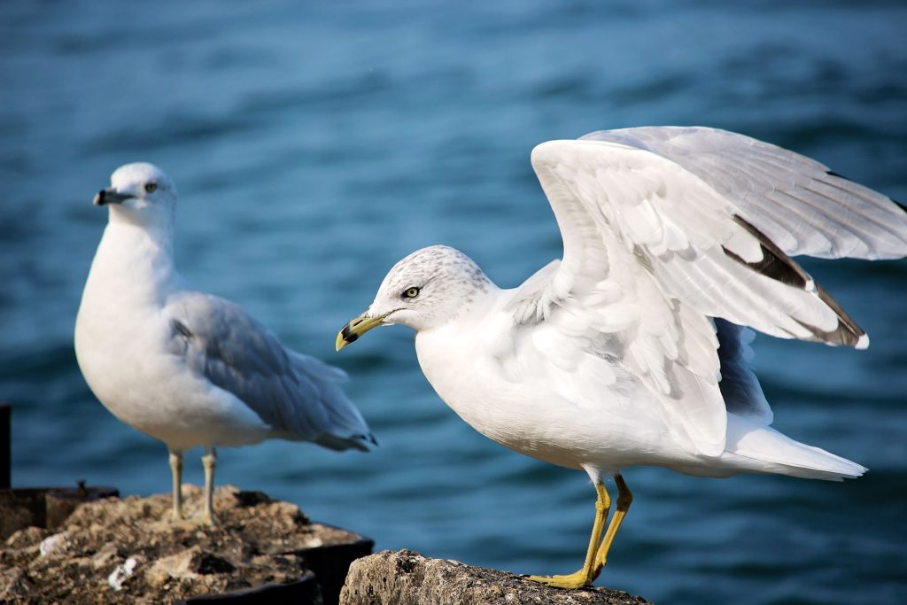 Essaouira Maroc - Ciel Oiseau