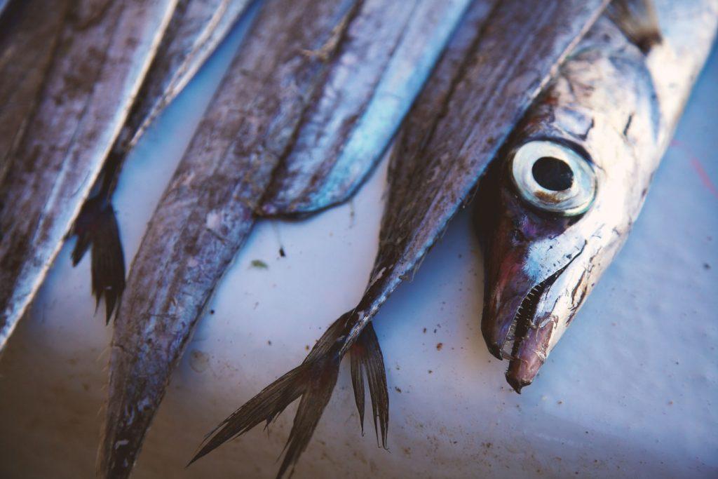 Essaouira Maroc - Marché aux poissons